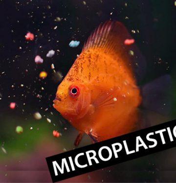 Apa Itu Microplastic? Limbah Plastik Yang Tidak Terlihat